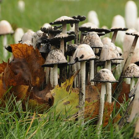 mushroom substrates