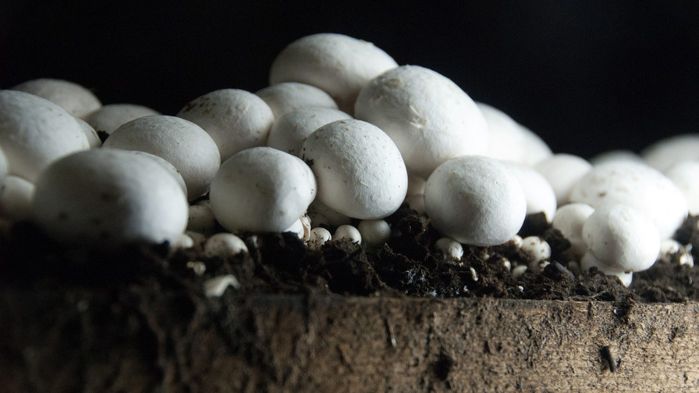 how to start growing mushrooms