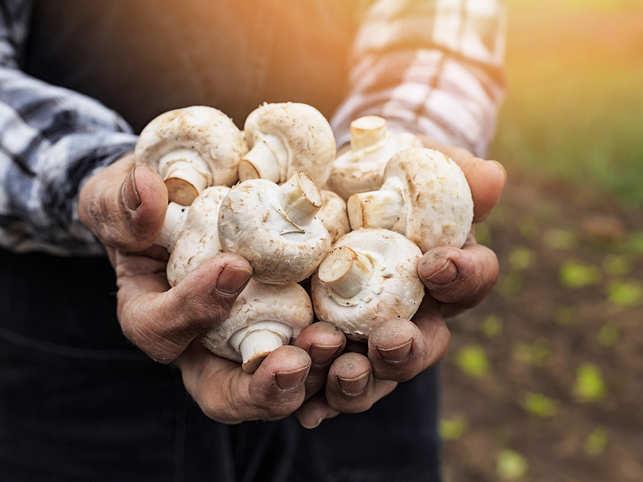 mushrooms prevent cancer