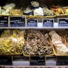 mushrooms, mushroom varieties