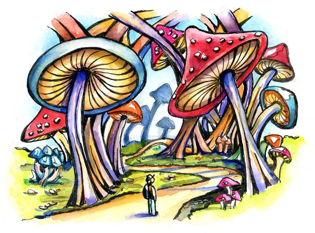 fungus, mushroom, toadstool, forest, mushroom forest