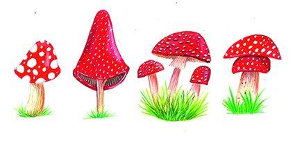 Mushroom, fungus, toadstool